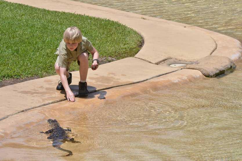 Robert Irwin turns 10 and celebrates at Australia Zoo with his first feeding of a saltwater crocodile. Photo: John McCutcheon / Sunshine Coast Daily
