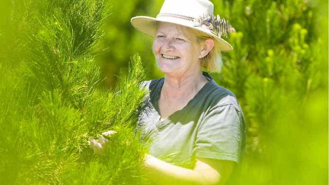 RIGHT: Libby Lund trims the trees at Seelands Christmas Tree Farm ready for opening on Saturday.