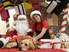 VIDEO: Guide dog gift wrappers are rapt to have your help