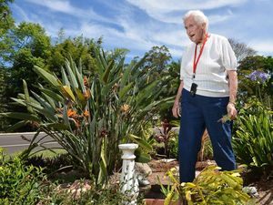 Plant thiefs plucking bunches from Sunshine Coast gardens