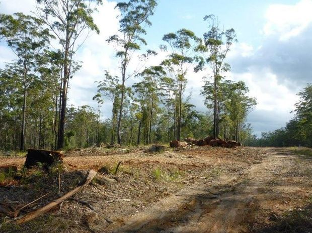 MNC Greens remain unconvinced by Essential Energy's explanation of land clearing at Hyland Park.
