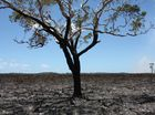 A large grass fire ravaged the Mooloolah National Park