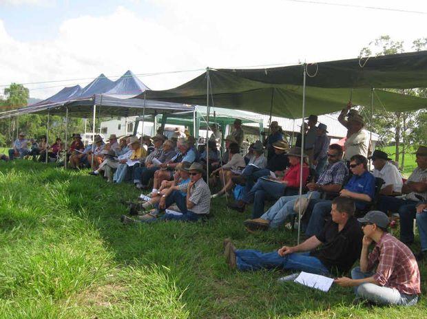 Cattle farmers in on field day talks | Rural Weekly