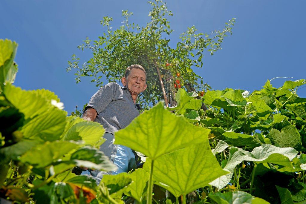 Ernie Patmore with his giant tomato plant.
