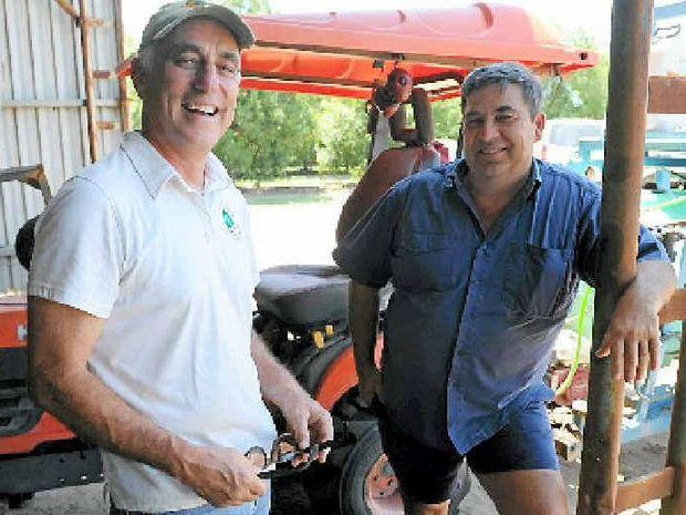 WORKSHOP: Australian Macadamia Society Ltd CEO Jolyon Burnett and Bundaberg Fruit and Vegetable Growers chairman Geoff Chivers at the Steinhardt Farnsfield Orchard.