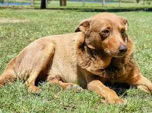 Red Dog laps up affection in Lawrence