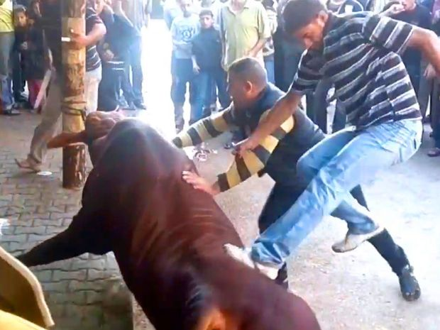 Animals Australia has released images and video of what it says is the mistreatment of Australian livestock in Gaza.