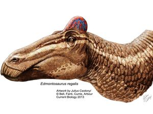 Dinosaur with a rooster comb? Rethink what you 'know'