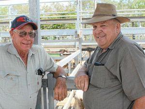 Rockhampton region livestock sales