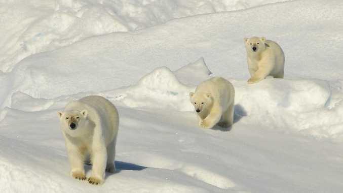Aurora Expeditions cruise through Greenland.