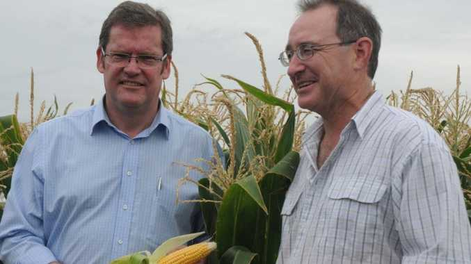 Plant physiologist Dr Tim O'Hare (right) shows Queensland Agriculture Minister John McVeigh the experimental corn UQ Gatton researchers hope will help prevent age-related macular degeneration.