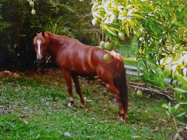 Missing horse Chessa.