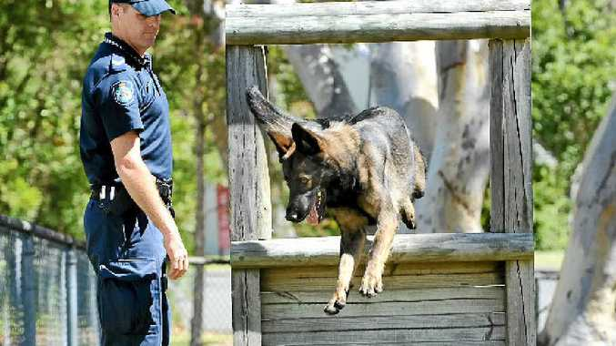 TRAINING: Senior Constable Matt Mayo with Sabre, one of two new police dogs for the Sunshine Coast.