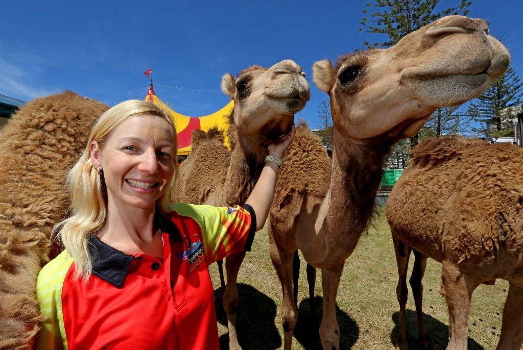 Animal trainer Belinda McGahan  from Hudsons Circus. Photo: Nolan Verheij-full / Daily News