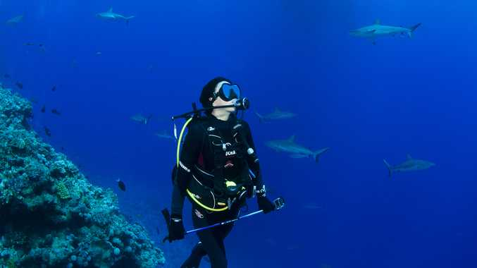 Sarah Richmond diving with reef sharks at Osprey Reef for the show.