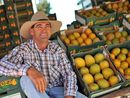 IT'S been a tough few years for local farmer Dave Dingle, but the sight of a big ripe mango brings an instant smile to his face.