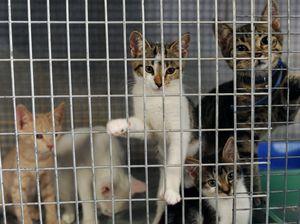 Loving homes needed for 'kitten tsunami'