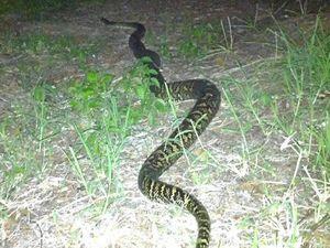 Snake released