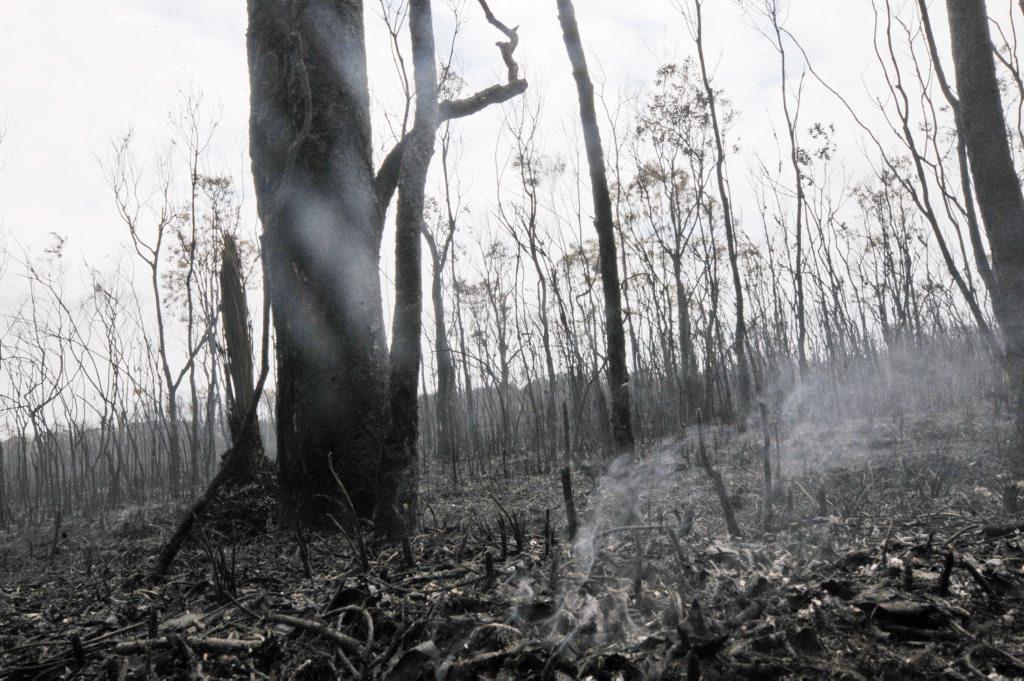Lennox Head Bush Fire Tuesday. Photo Doug Eaton / The Northern Star