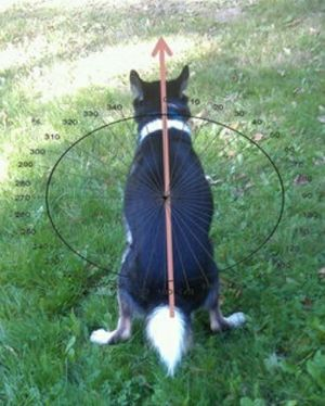 A dog does his business in alignment with the earth's magnetic field.