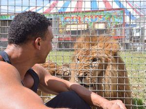 Feeding the lion at Lennon Bros Circus