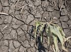 Dry cracked earth on Cameron Saal's property at Brookstead, Friday, January 03, 2014. Photo Kevin Farmer / The Chronicle