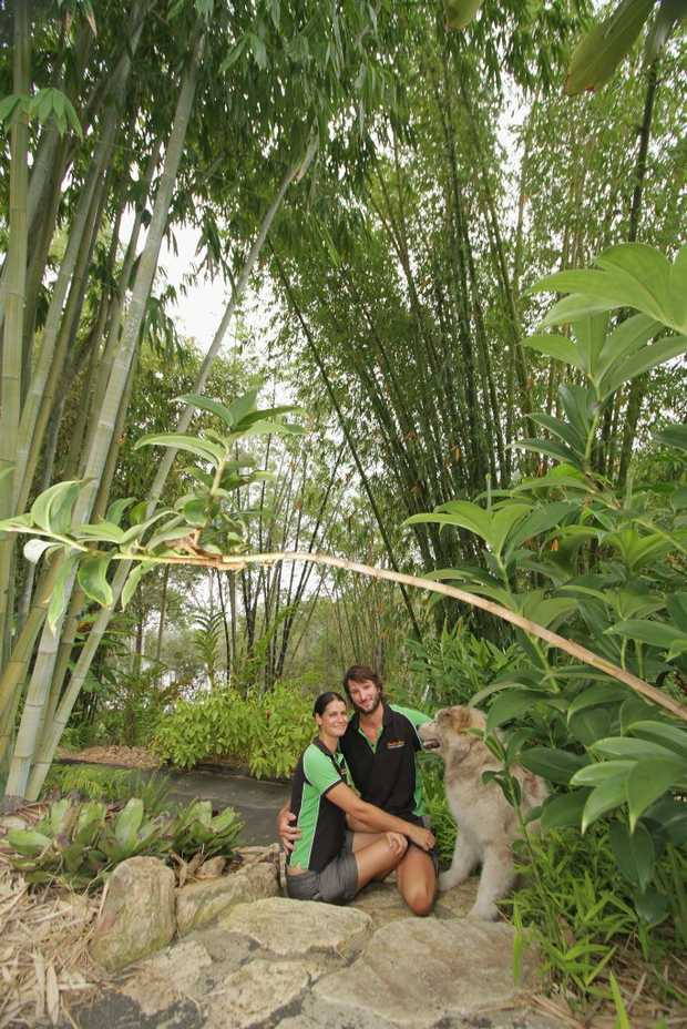 Image for sale: Tarissa Beilby and Janne Nilsson, with their malamute Nelson, at Bamboo Land on the Burrum River.