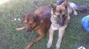 Tara (right) was mistakenly euthanised after she was taken to the Hervey Bay pound.