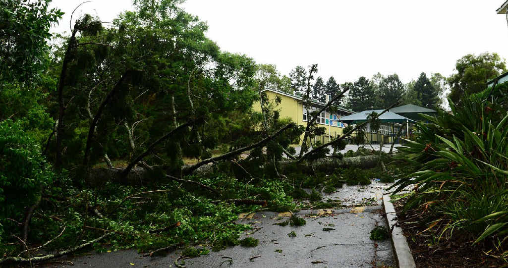 A tree fell inside the grounds of Ipswich Central State School during the wild storm.