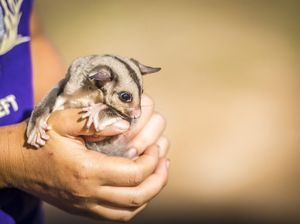 Safe Haven wildlife refuge