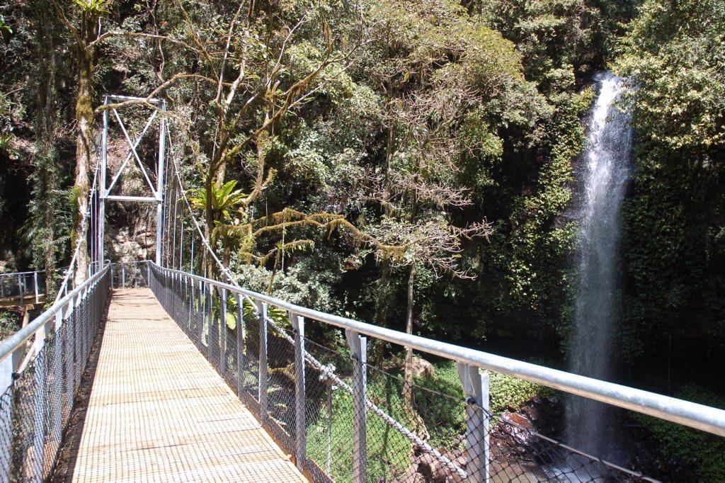 The Crystal Shower Falls suspension bridge at Dorrigo National Park.