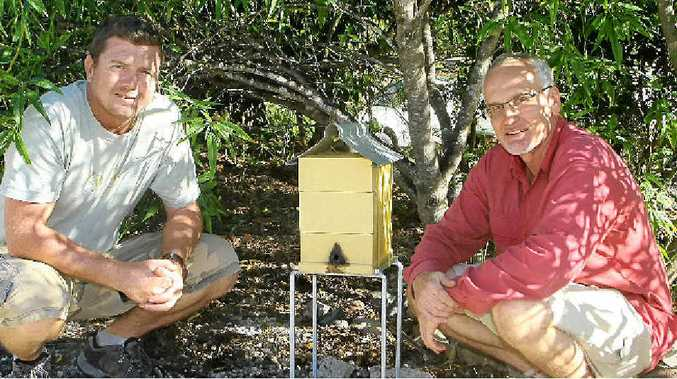 Chris Fuller from Kin Kin Native Bees and Dr Tim Heard of the CSIRO, with a surviving hive of stingless native bees at Landcare Nursery.