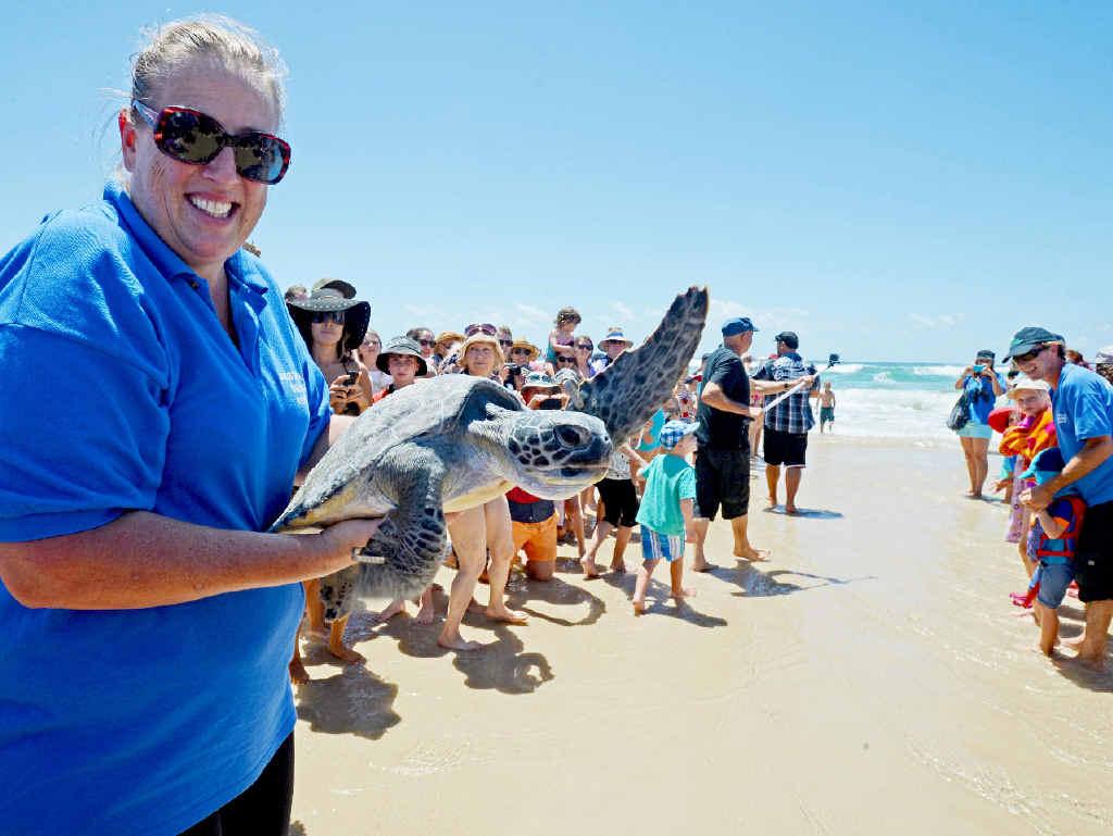 WAVING GOODBYE: Tiffany Lee, of Australian Seabird Rescue, releases Cruz, the green sea turtle, near Flat Rock.