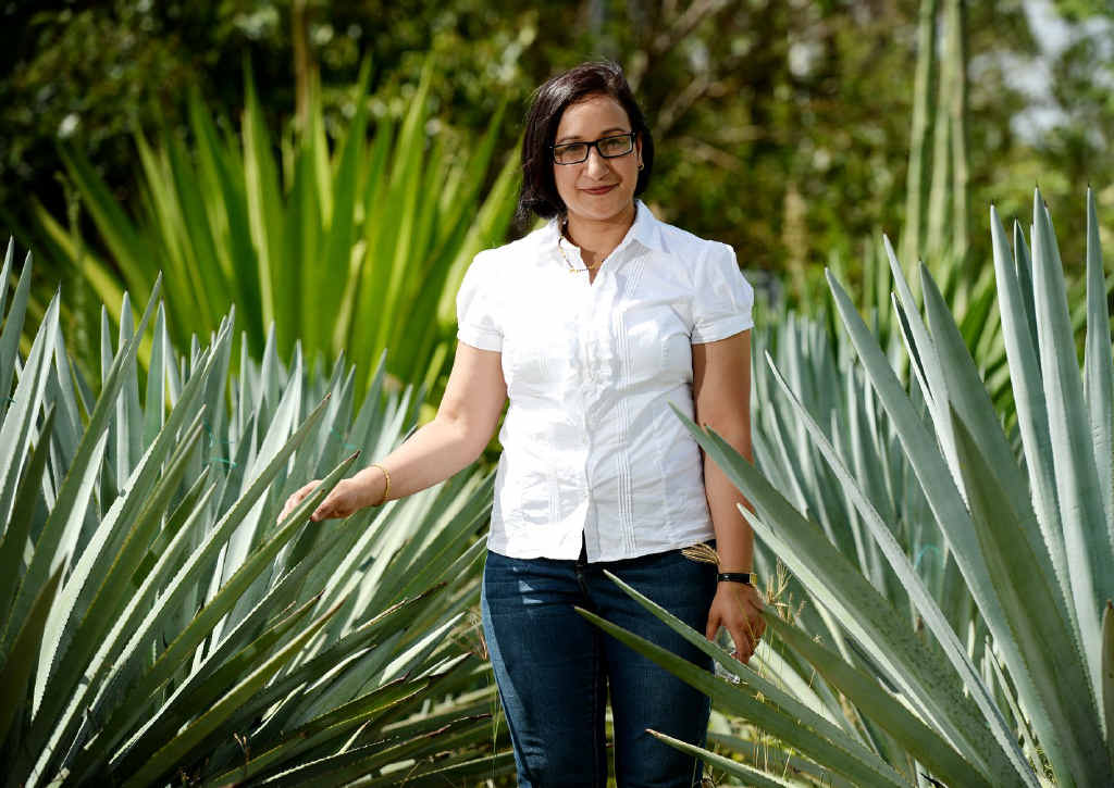 GOING GREEN: CQUniversity PhD student Deepa Rijal has been testing the composition of agave leaves to determine the ideal time for harvest. PHOTO: ALLAN REINIKKA ROK140114ATEQUILA