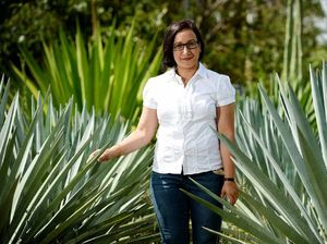 Traditional tequila plant could make cost effective bio-fuel