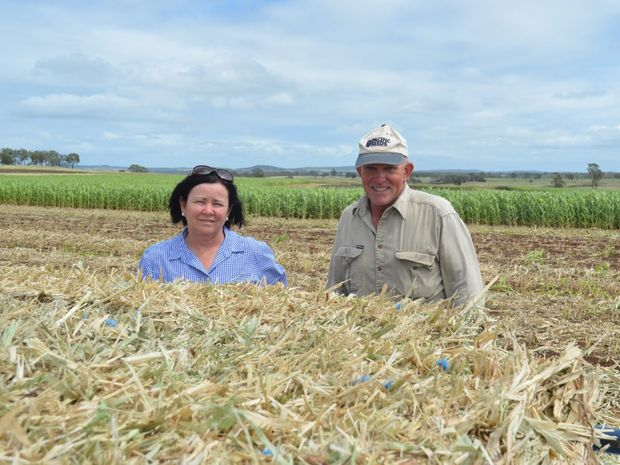 Forage business manager Maree Crawford with Wyreema grower Warren Folker, who bales forage sorghum at his property 'Kilowen' each year.
