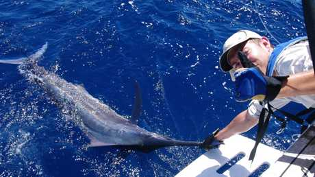 George Blackwell about to bid farewell to one of his two Thursday marlin. Photo - Rick O'Ferrall