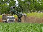 Harvest of sugar crop may drop 12% in Mackay