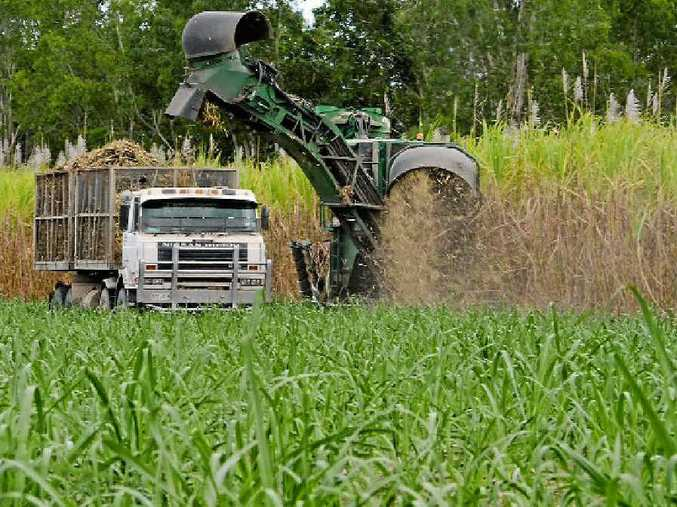 Sugar misses out in Trans Pacific Partnership deal