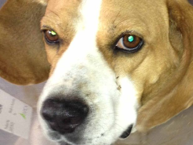 Residents are being urged to watch out for dingos after Rosie was killed.