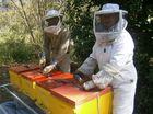 Honey we shrank the hives