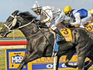 Spatha is genuine favourite in Iris Nielson race