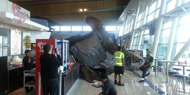 The giant eagle hanging from the roof of Wellington airport to promote the Hobbit trilogy has fallen down due to the shake.