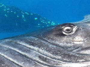 Stunning photo of humpback whale's eye is up with best
