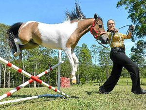 Meet the miniature horses with big hearts