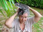 Possum magic: Carer puts furry family first