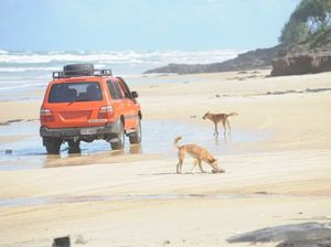 Group believe Fraser Island's dingoes at risk