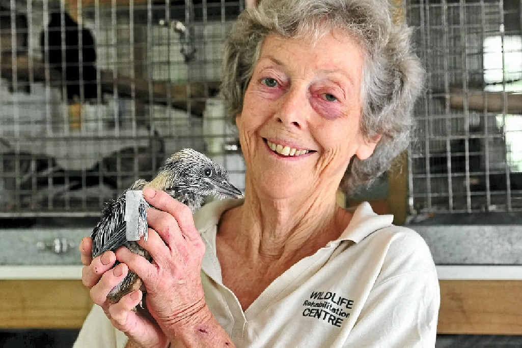 ANIMALS' CHAMPION: Gill Brownhill at the Eumundi Wildlife Rehabilitation Centre.
