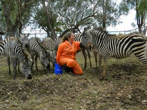 Stripy zoo residents were six years in the works