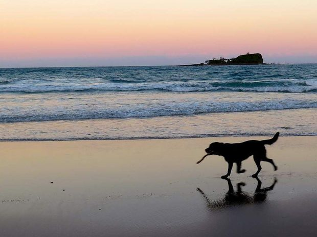 A dog running along the beach at sunset, as captured in fading light with a Canon Powershot G16.